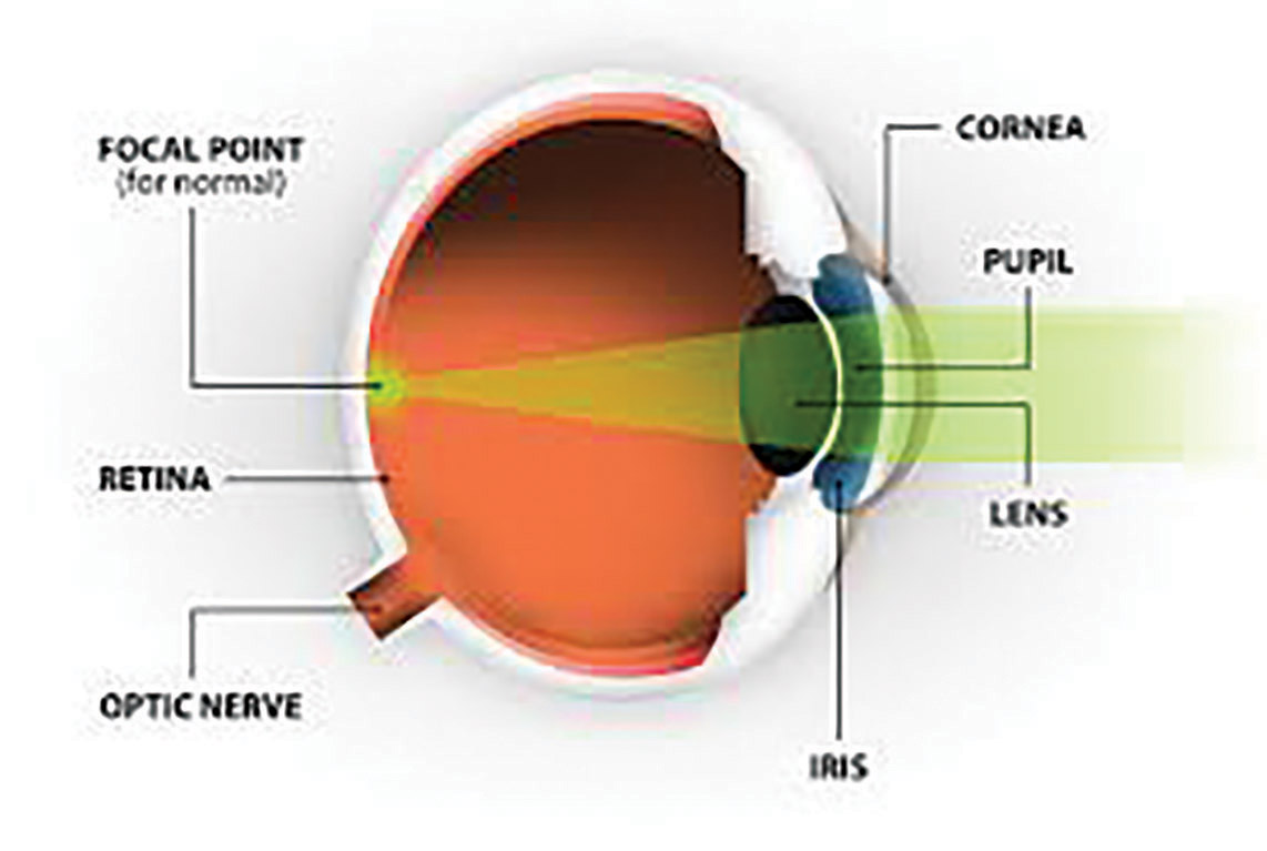 eye parts and functions pdf