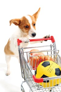 Dog with shopping cart isolated on white