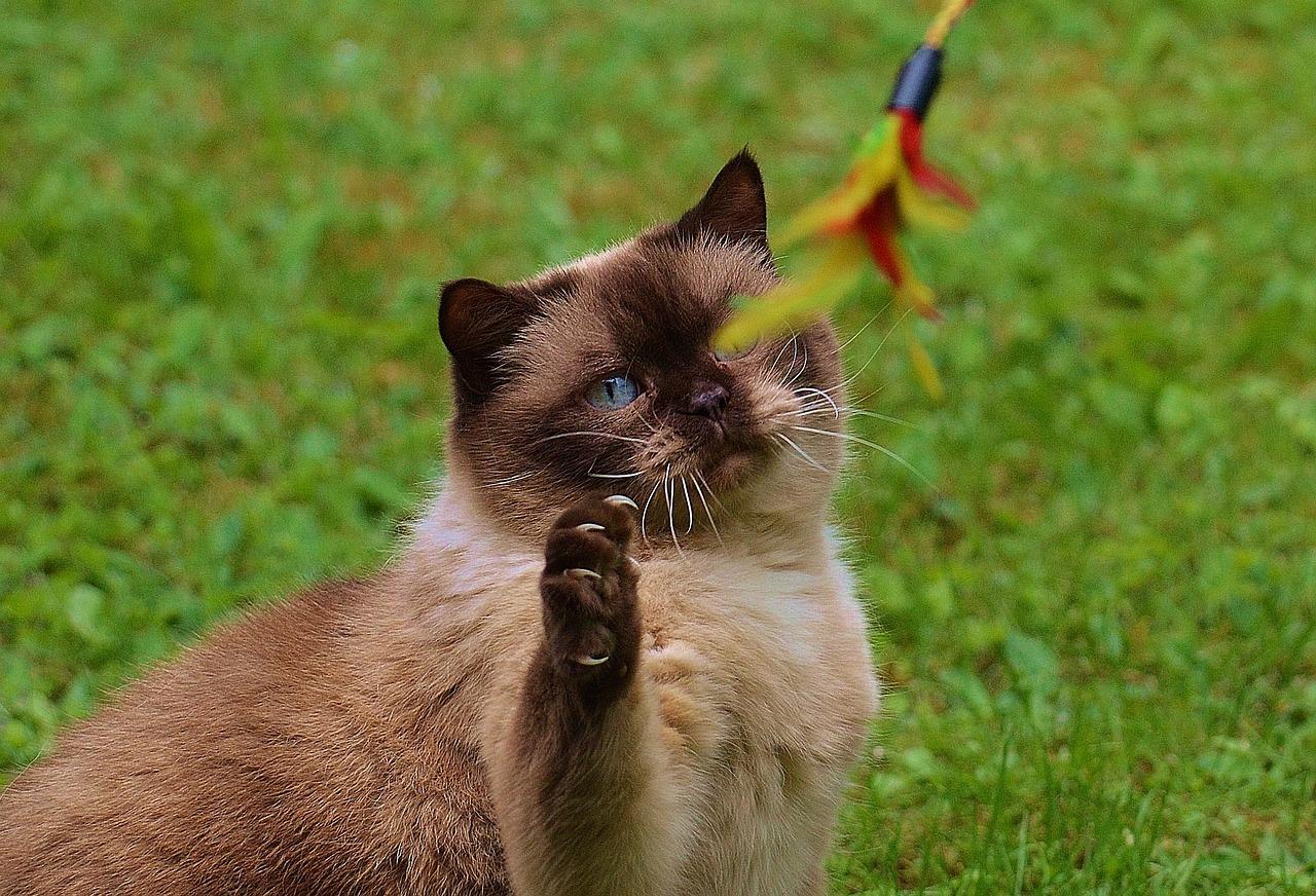 royal cat name