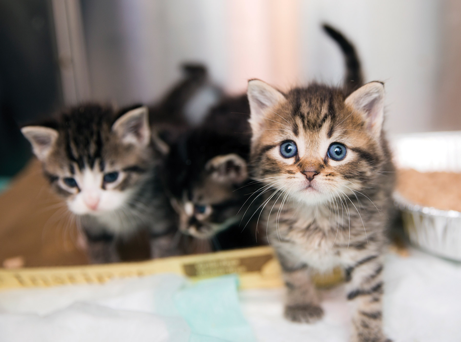Everything s ing Up Kittens at Best Friends Kitten Nursery