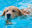 Aquatic Therapy can help dogs by taking pressure off joints while increasing heart rates.