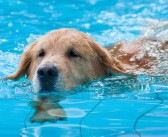 Aquatic Therapy for Pets