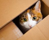Cats' Love Affair with Boxes