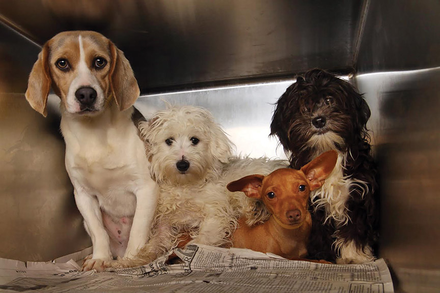 puppy mills research paper Puppy mills are commercial breeding facilities which mass produce dogs solely   be sure to research all characteristics of the breed of your choice and make   the akc bolsters the puppy mill industry by issuing akc registration papers to.