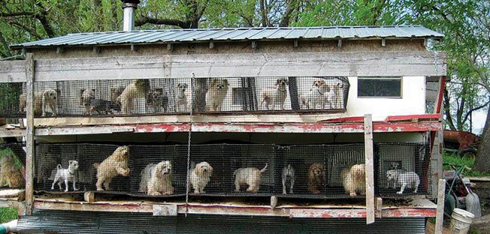 Newly Reviewed Studies Show Dogs Born in Puppy Mills Have Increased Emotional, Behavioral Problems as Adults